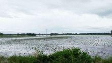 Alertan que en el norte de Santa Fe un millón de hectáreas siguen bajo el agua