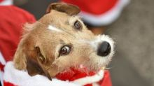 Santa claws: UK supermarkets sell festive snacks for pets