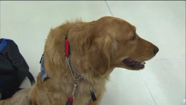 Comfort dogs head to AZ to help wildfire victims