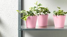 Ikea's Latest Collection Is Perfect For Every Type Of Plant Lover