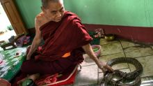 Myanmar Buddhist temple now a nirvana for snakes