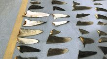 Fishing boat owner pleads guilty in shark finning case