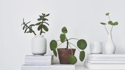 The psychology behind our obsession with house plants