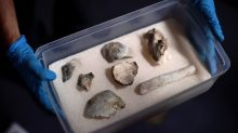 Brazil recovers ancient human fossil fragments from burnt Rio museum