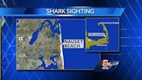 Lifeguards not going 'Chief Brody' on beachgoers after shark sighting