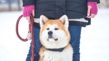 12 razas de perros que adoran el frío