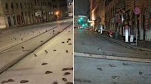 'Massacre': Images reveal disturbing outcome of city's fireworks celebration