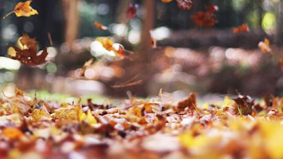 20 Fall iPhone Wallpapers That'll Instantly Make You Feel Cozy