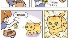 [貓奴的日常] 新玩具