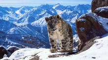 Attenborough documentaries 'actively mislead audiences' into thinking wildlife is doing fine, scientists warn