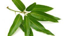 6 Astonishing Health Benefits Of Mango Leaves