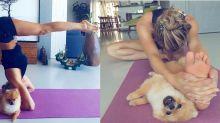 Cão 'invade' show de flexibilidade de Grazi Massafera nas redes sociais