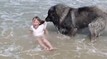 Adorable video shows dog 'rescuing' girl from ocean swell