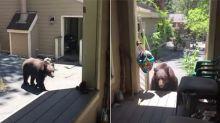 Mujer aleja a un oso usando solo su 'voz de mamá'