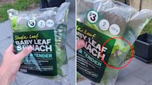 Woolworths shopper finds live moth 'chilling' in closed spinach bag