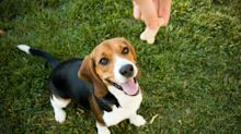 You Can Teach Any Dog to Behave With These Essential Commands