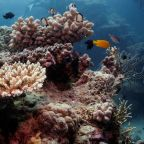 UN irks Australia by recommending Great Barrier Reef be listed 'in danger'