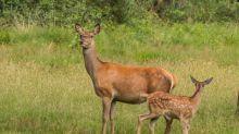 Undercover sting nabs deer-meat delinquents on Vancouver Island