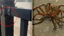 Why spiders are coming out in their thousands during flooding