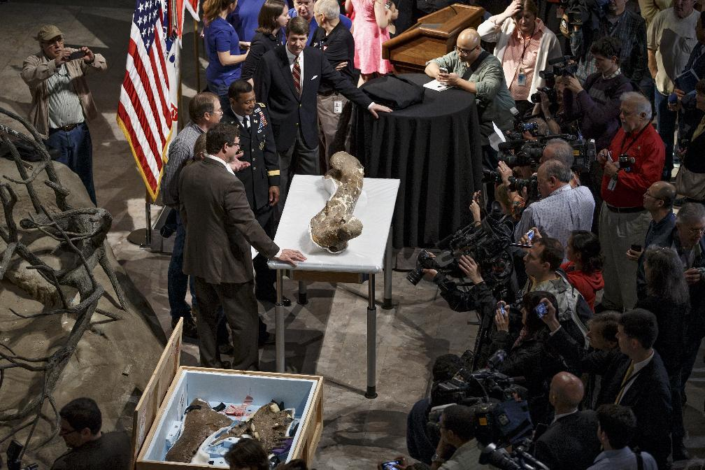 The fossilized bones of a Tyrannosaurus rex are displayed for the media during a ceremony at the Smithsonian Museum of Natural History in Washington, Tuesday, April 15, 2014. The Tyrannosaurus rex is joining the dinosaur fossil collection on the National Mall on Tuesday after a more than 2,000-mile journey from Montana. For the first time since its dinosaur hall opened in 1911, the Smithsonian's National Museum of Natural History will have a nearly complete T. rex skeleton. FedEx is delivering the dinosaur bones in a truck carrying 16 carefully packed crates. (AP Photo/J. Scott Applewhite)