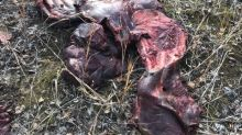 Don't waste meat, Yukon government warns after finding dumped moose parts