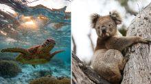 Great Barrier Reef and more Aussie destinations 'under threat'