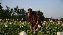 Afghan opium producers hit hard by drought in 2018