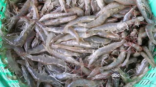 Imported Shrimp Tested for Chemicals