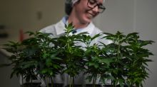 Companies to watch: Tilray under pressure,  problems for The RealReal, Amazon senses fear