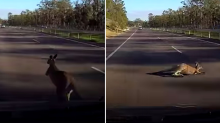 Moment car is taken out by truck after colliding with kangaroo