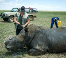 S.Africa's first online rhino horn auction sparks anger