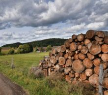 10 Best Lumber Stocks to Buy Now