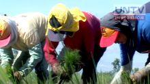 PH to send 22 farmers to Papua New Guinea to do farming demo