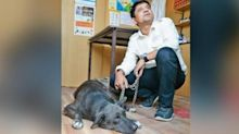 """Burari deaths: Tommy the dog, """"only remaining family member,"""" dies"""