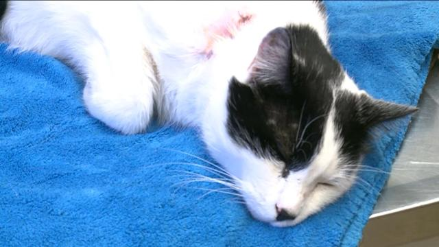 Mayor Rescues Cat Shot With Crossbow