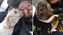 Dog rescued from snowy mountains after getting trapped on 60m ledge