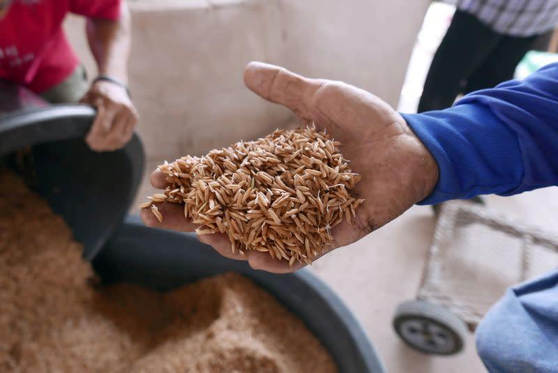 Thai rice rates hit four-month low, Vietnam jumps as heavy rains persist