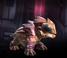 Transfer your SWTOR character, get an in-game pet
