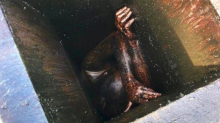 Man 'extracted' from restaurant grease vent after being stuck inside for two days