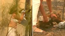 Woman risks life to save scorched koala from bushfires