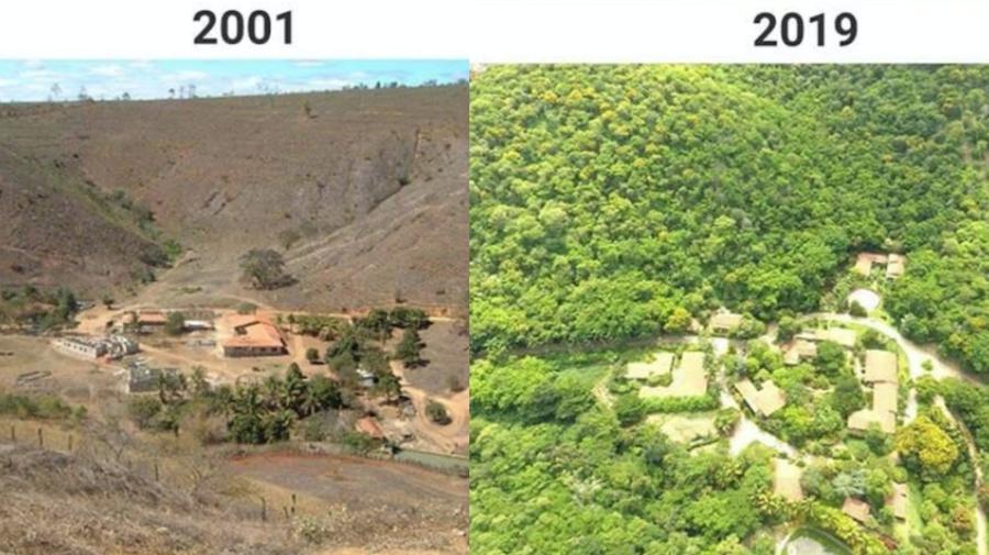 Una pareja reforestó un bosque destruido y así luce 18 años después