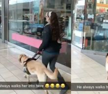 Sneaky guide dog leads owner to his favourite store whenever they're out shopping