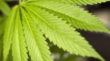 Tutte le leggende metropolitane sulla marijuana