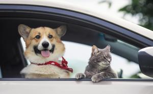 5 ways you can write off your pets on your taxes