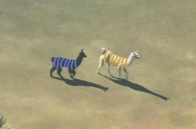 Happy net neutrality day! Here are some llamas and a dress