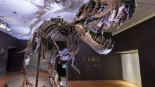 An auction house with good bones: Stan the T rex is for sale