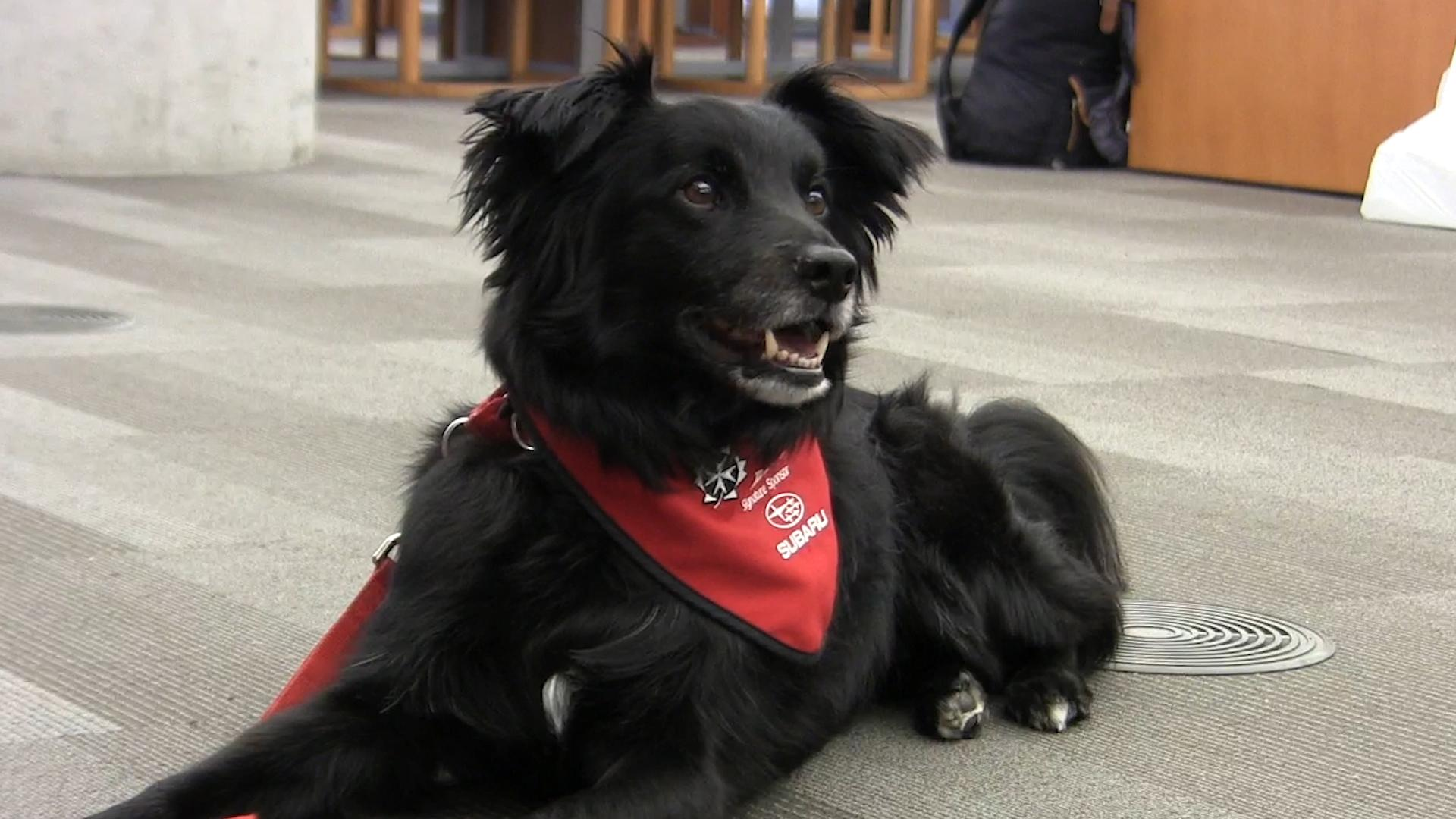 Therapy dogs the newest items to borrow at library