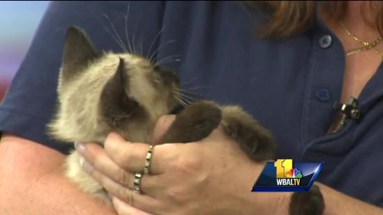 Maryland SPCA pet looking for a good home