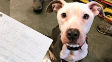 'Please take care of Sky': Dog found with heartbreaking note about owner