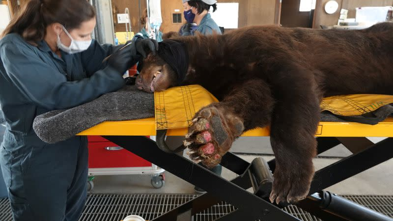 Rescue network seeks to save, rehab California's fire-stricken wild animals